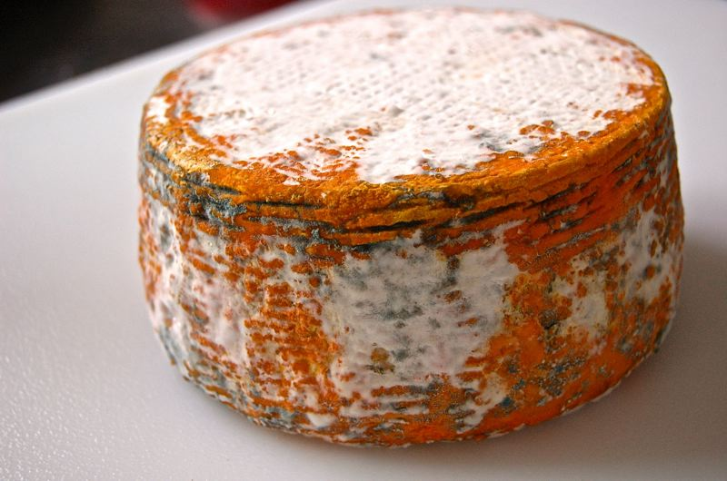 by: PHOTOS COURTESY OF TAMI PARR - Goldin Artisan Goat Cheese