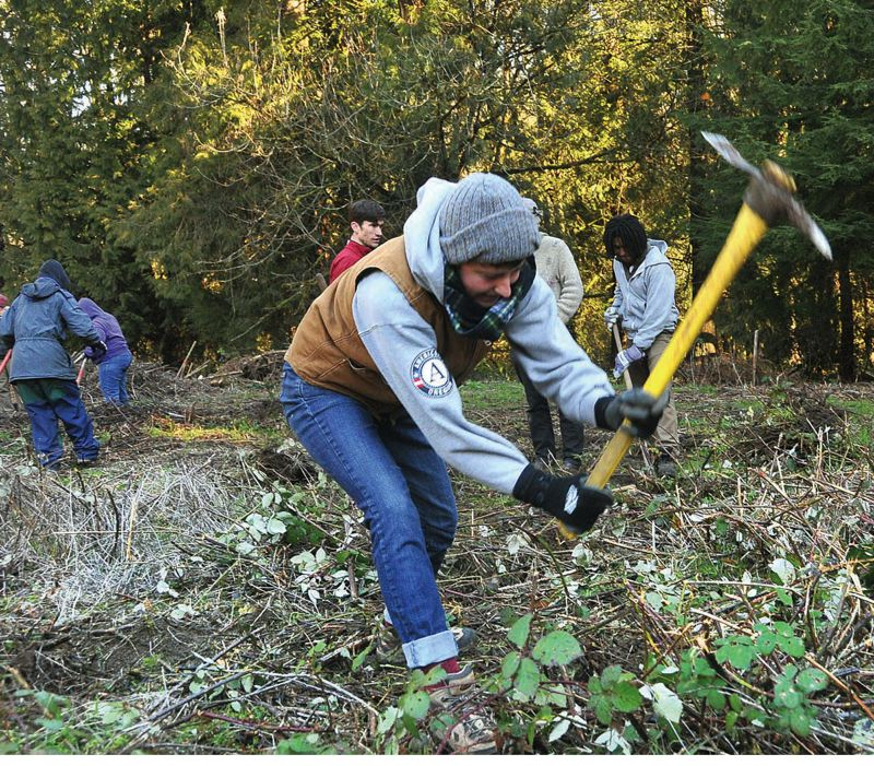 by: PAMPLIN MEDIA GROUP: VERN UYETAKE - AmeriCorps volunteers take care of some serious business - clearing away blackberries - at Tryon Life  on Martin Luther King Jr. Day.