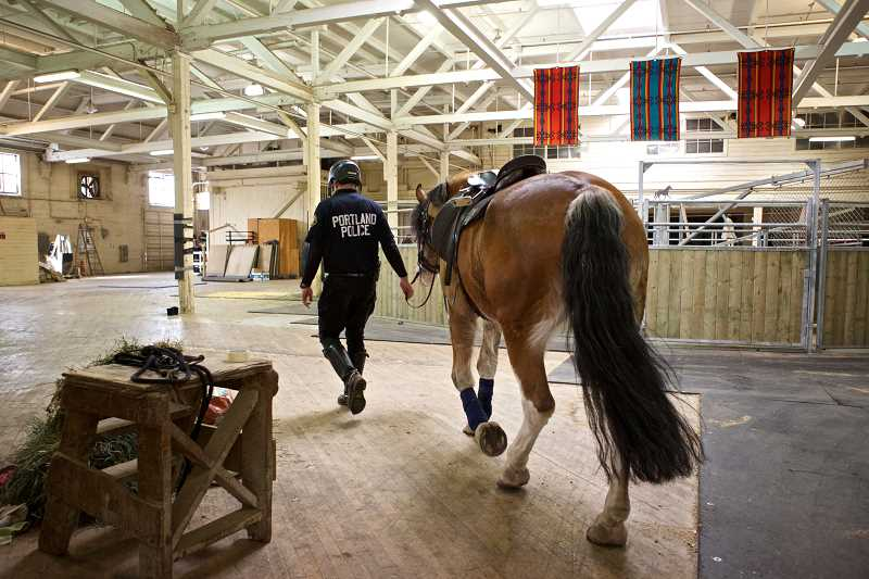 by: TRIBUNE PHOTO BY JAIME VALDEZ - Portland Police Officer Benson Weinberger walks Diesel into the safe portion of the Centennial Mills building where the Mounted Patrol prepares for their shifts.