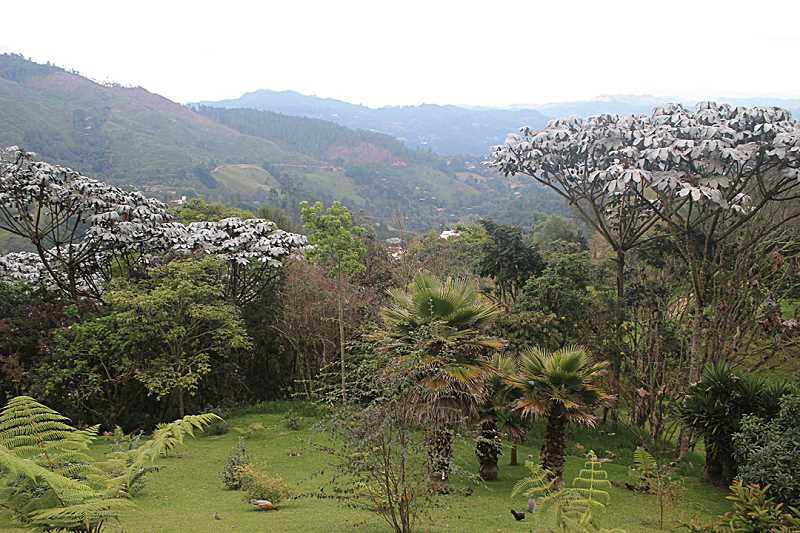 by: HOLLY M. GILL - The view from the 'finca'- or country residence - show the tropical foliage of the area near Medellin, Colombia.