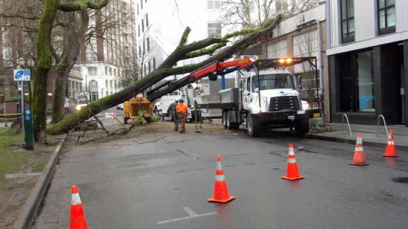 (Image is Clickable Link) by: COURTESY OF KOIN NEWS 6 - A tree in the North Park Blocks fell early Thursday morning, March 6, after heavy winds slammed into the region. No one was injured, but a Firestone Tire store was damaged by the falling tree.