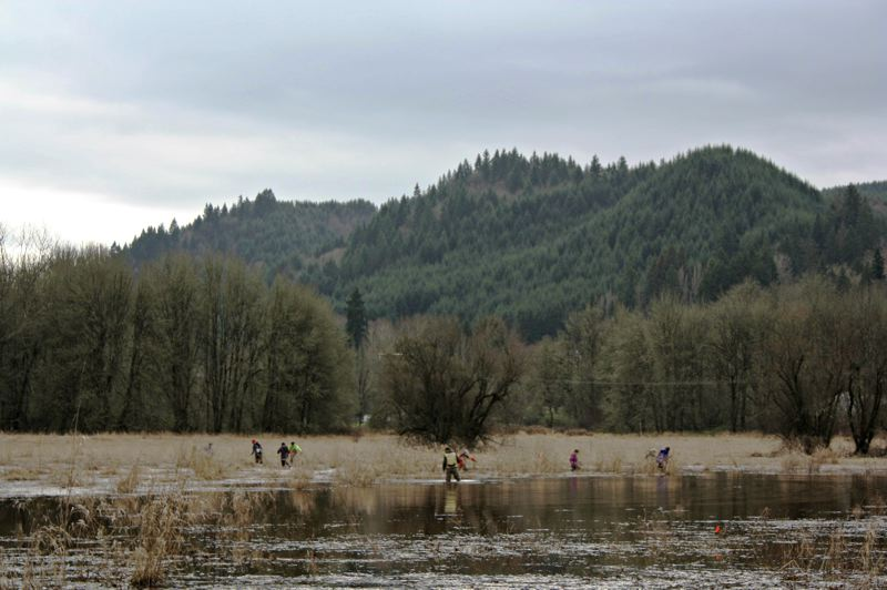 by: SPOTLIGHT PHOTO: ROBIN JOHNSON - The Scappoose Bay Watershed Council aims to restore connectivity between Joy Creek, the Duck Lake Wetlands and the Multnomah Channel. The council hopes to bring native salmon into the area while preserving the existing amphibian habitat.