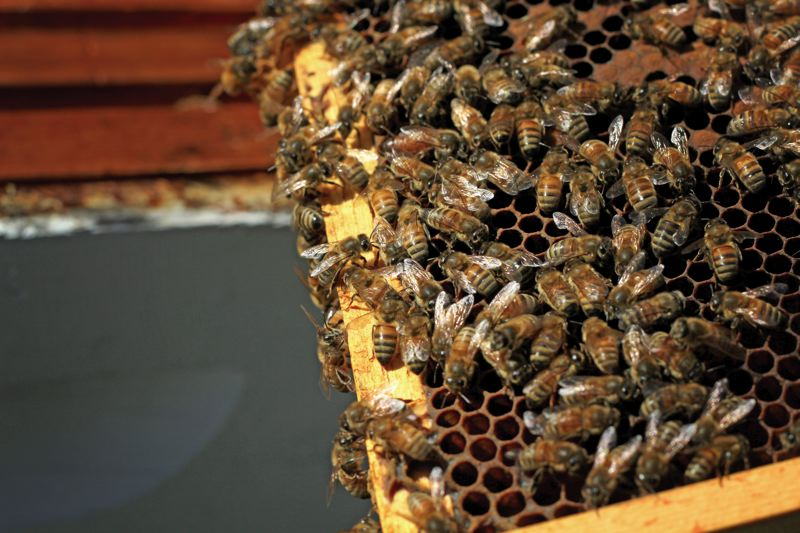 by: PAMPLIN MEDIA GROUP: JONATHAN HOUSE - Bees enjoy a warm February afternoon on a hive in Glen Andresens yard.