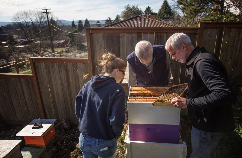 by: PAMPLIN MEDIA GROUP: JONATHAN HOUSE - Master beekeepers Glen Andresen (center) and Tim Wessels, right, along with intern Anne Tracy, check on bees in their mating yard. They set up neighbors with hives populated by drones that appear to be winter-hardy, hoping to breed local queen bees that can withstand Portlands cold winter temperatures.
