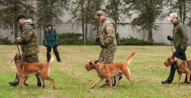 by: SPOKESMAN PHOTO: JOSH KULLA - Retired CCSO Deputy Hilary Robinson, back, oversees a final class of K-9 officers and dogs, including (from left) Woodburn Officer Zach Williams and Bart, CCSO Deputy Donnie McCafferty and Kilo and CCSO Deputy Jeff Cameron and Vito.