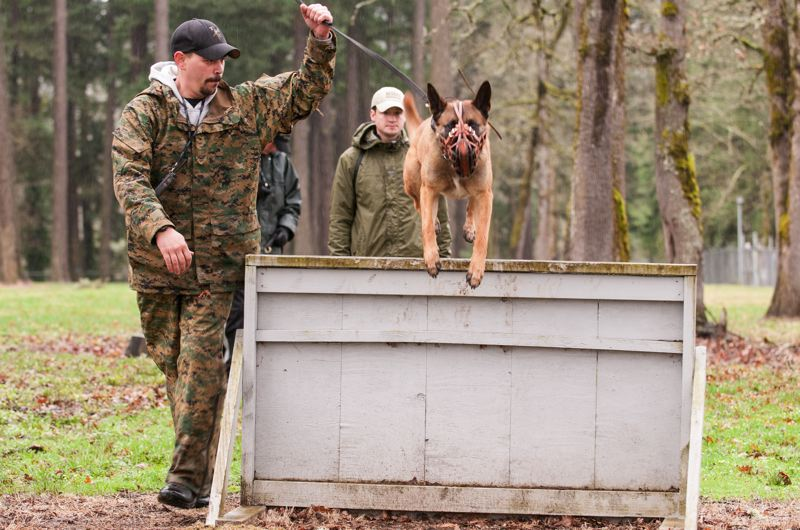 by: SPOKESMAN PHOTO: JOSH KULLA - Woodburn Police Officer Zach Williams leads Bart through an obstacle course at the Clackamas County Sheriff's Office K9 training ground.
