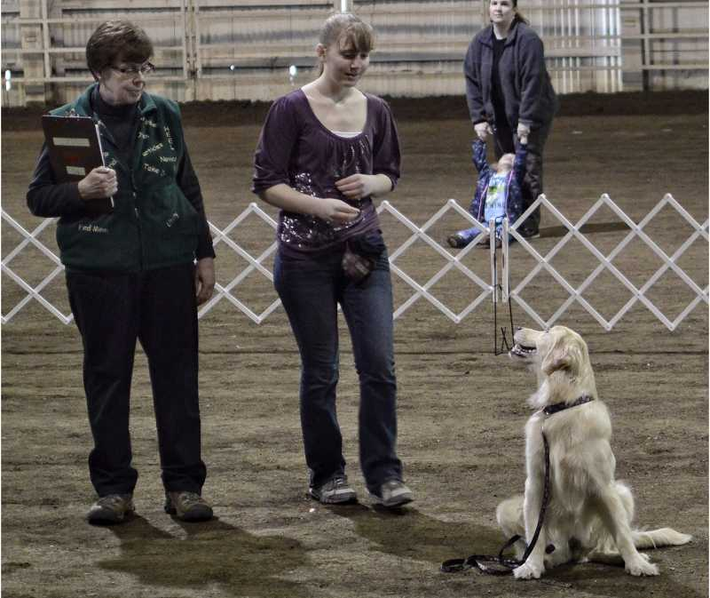 by: RAY HUGHEY - Derby, a golden retriever owned by Kindi Weix, of Hillsboro, has his moment in the ring at the Sherwood Dog Training Clubs' Big March Match at the Clackamas Event Center.