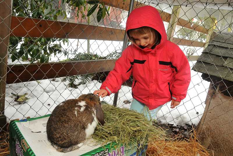 by: PAMPLIN MEDIA GROUP: VERN UYETAKE - Four-year-old Brooklyn Molander-Finch visits the rabbit pen at Friendship Farm Preschool.