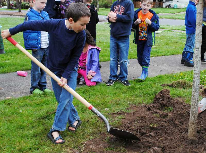 by: NEWS-TIMES PHOTOS: STEPHANIE HAUGEN - Lowell Wilson (pictured here) helped dig a hole and plant a Red Oak donated by EF Nursery. The parks established trees are 150- to 200-year-old Oregon White Oaks, according to arborist David Hunter, who helped out with the planting.
