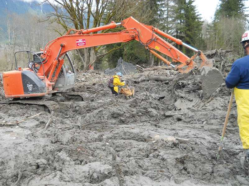 by: CONTRIBUTED PHOTO - Lori Blackburn and her K-9 Annie,  take part in the recovery process at the Oso, Washington mud slide site.