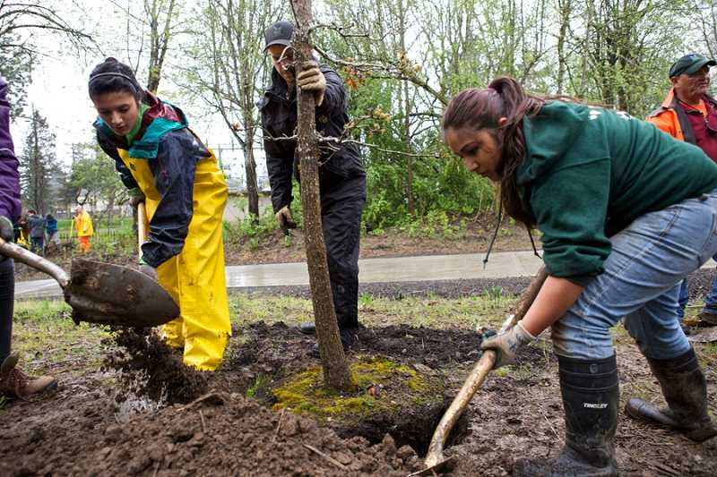 by: JAIME VALDEZ. - Tigard High School students Cinthya Barrera and Micaela Gonzalez, plant a tree along the Fanno Creek Trail in Tigard. The students are part of the Cascade Education Corps, which does environmental work across Washington County.