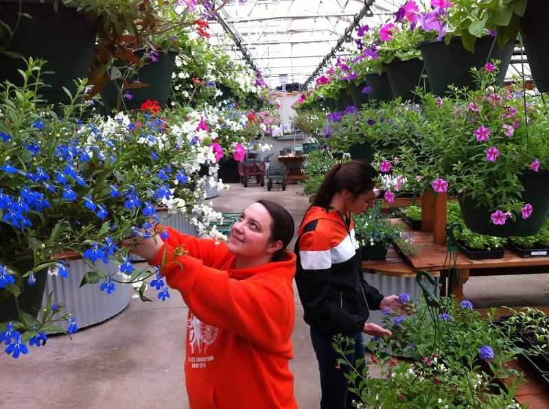 by: COURTESY OF SHERWOOD HIGH SCHOOL - Students tend to hanging baskets in the Sherwood High School greenhouse in preparation for the annual plant sale, which begins May 1.