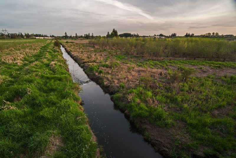 by: SPOKESMAN PHOTO: JOSH KULLA - The Seely Ditch was a mile-and-a-half civil engineering project dug by hand in 1858. It drained what is now the Coffee Creek wetland in north Wilsonville, allowing the area to be transformed into a fertile wheat farm.