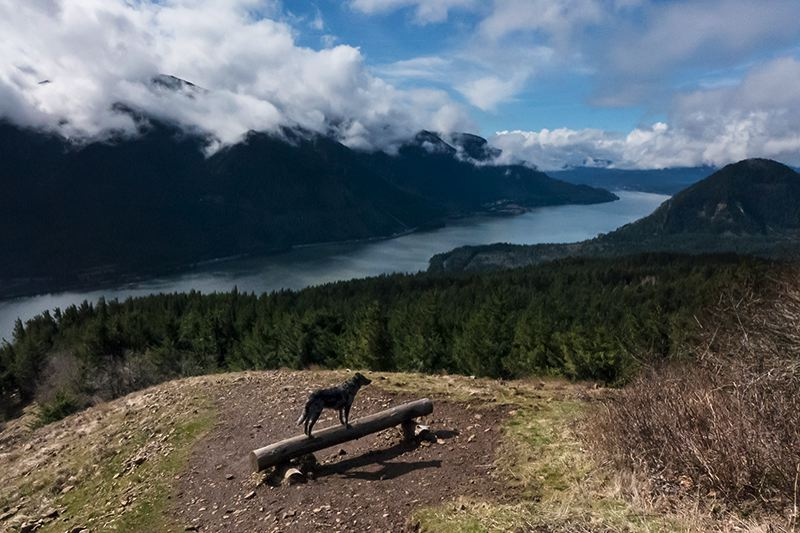 by: PAMPLIN MEDIA GROUP: JONATHAN HOUSE - Cooper surveys the Columbia River Gorge from Dog Mountain.