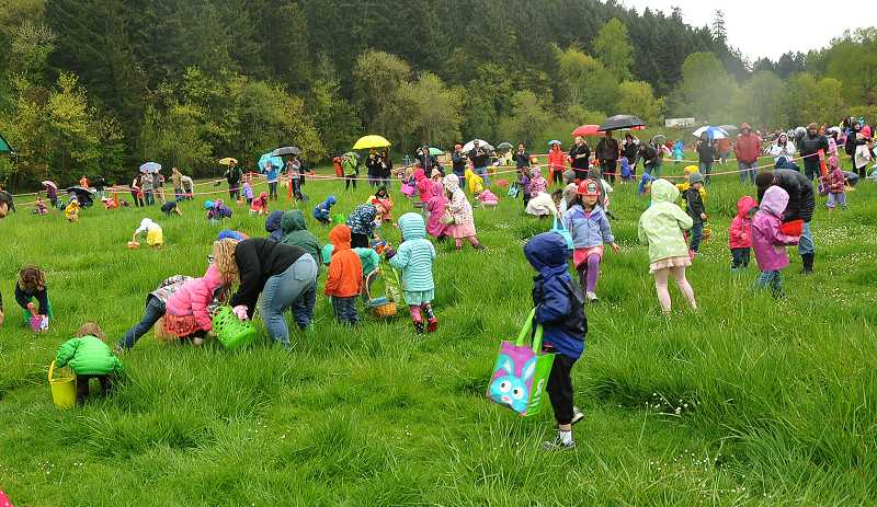 by: REVIEW PHOTO: VERN UYETAKE - Sharp-eyed little people scour the grounds of the Lake Oswego Hunt Saturday during the annual Hop at the Hunt family Easter egg hunt. Hundreds of children delighted in finding plastic eggs filled with candy along with a few treasure eggs. Various attractions like pony rides, a barn tour, fire truck and police cruiser also were provided to keep the day hopping for the youngsters.