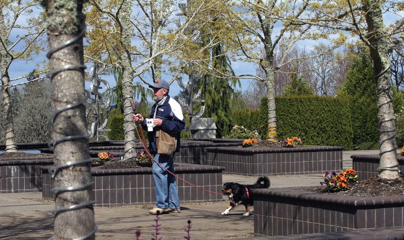 by: PHOTOS: JIM CLARK / PAMPLIN MEDIA GROUP - When he's not volunteering at the Oregon Garden, Ed Green likes to walk there with his dog, Duchess.