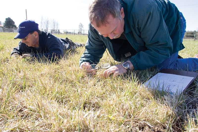 by: KEVIN SPERL - Mylen Bohle, right, area Extension agronomist for the OSU Extension Service, checks for the presence of Winter Grain Mites in the fields of the McGinnis Ranch in Bend with ranch Manager Greg Mohnen. Bohle is managing a three-year Potassium rate trial on ranch property.