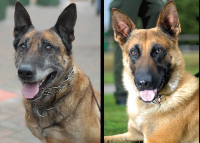 by: PHOTO COURTESY: CCSO - Mik and Nero are pictured from left.
