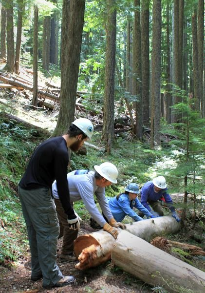 by: OUTLOOK PHOTO: CARI HACHMANN - The crew works together to move a log off the trail.