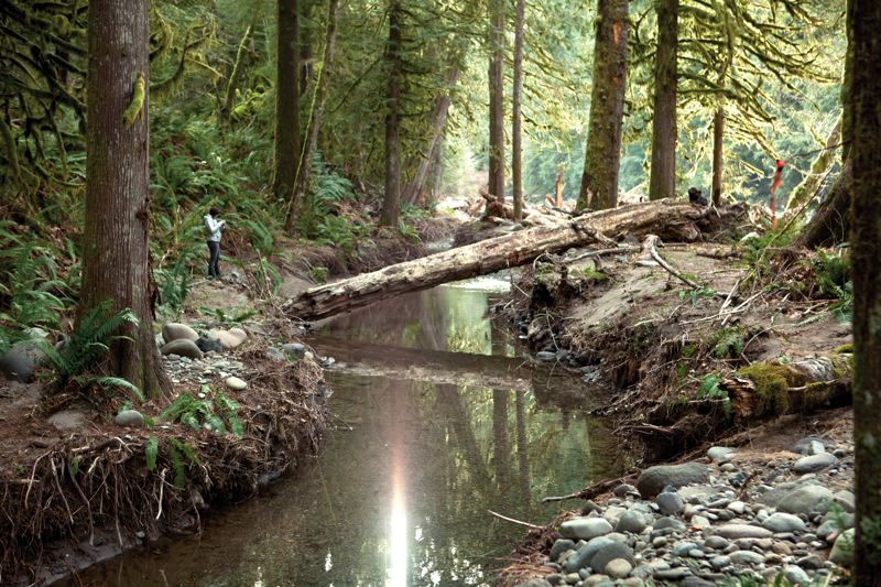by: COURTESY OF MAGAURN VIDEO MEDIA - Restored Sandy River side channel provides habitat for spawning salmon and steelhead. The project was recognized recently with a state honor.
