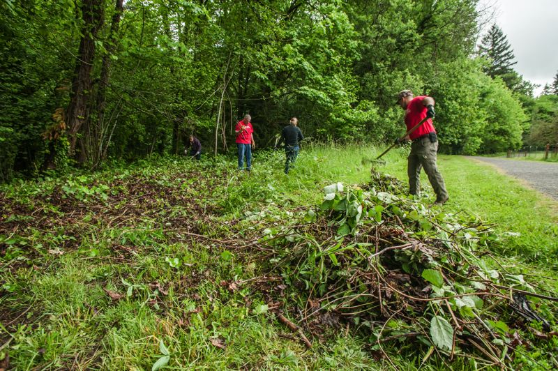 by: SPOKESMAN PHOTO: JOSH KULLA - Ripping out invasive ivy and blackberry plants was a major part of Saturdays WERK Day. Here, it is done by volunteers from the Wilsonville Fred Meyer.
