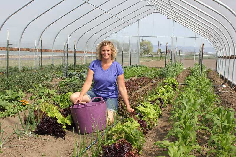 by: SUSAN MATHENY/THE PIONEER - Terri Buck harvests lettuce in her new high tower greenhouse at the family farm.Susan Matheny/The
