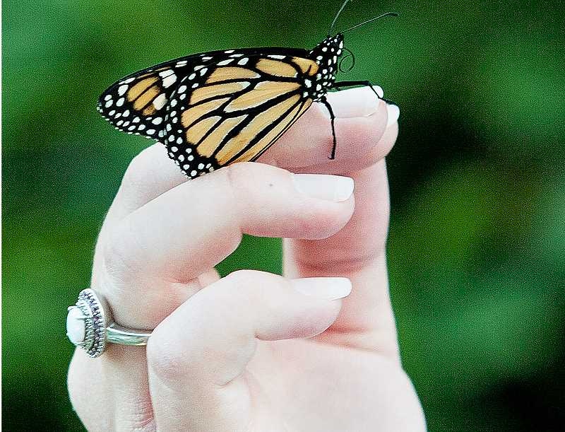 by: SUBMITTED - In 