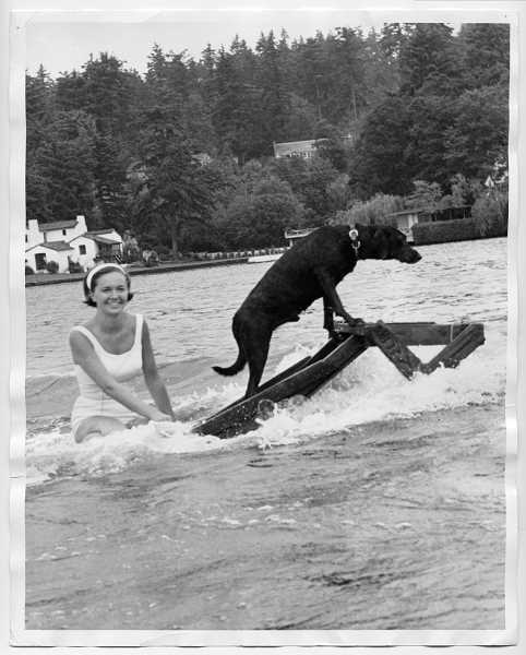 by: FILE PHOTO: OSWEGO HERITAGE HOUSE - Yogi the wonder dog goes surfing USA with his owner, future beauty queen Lita Schiel (later Grigg), on Oswego Lake. Although Yogi did not use a regular surf board he still could make waves at water shows.