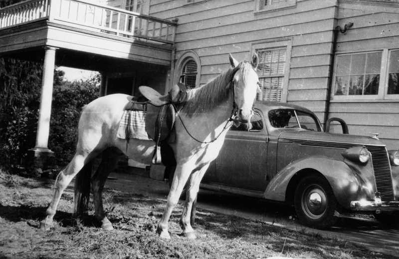 by: FILE PHOTO: OSWEGO HERITAGE HOUSE - Legendary Lake Oswego newspaper woman Beth Ryan often used her horse while gathering news around town.  It is shown relaxing at Sunny Hill Horse Farm.