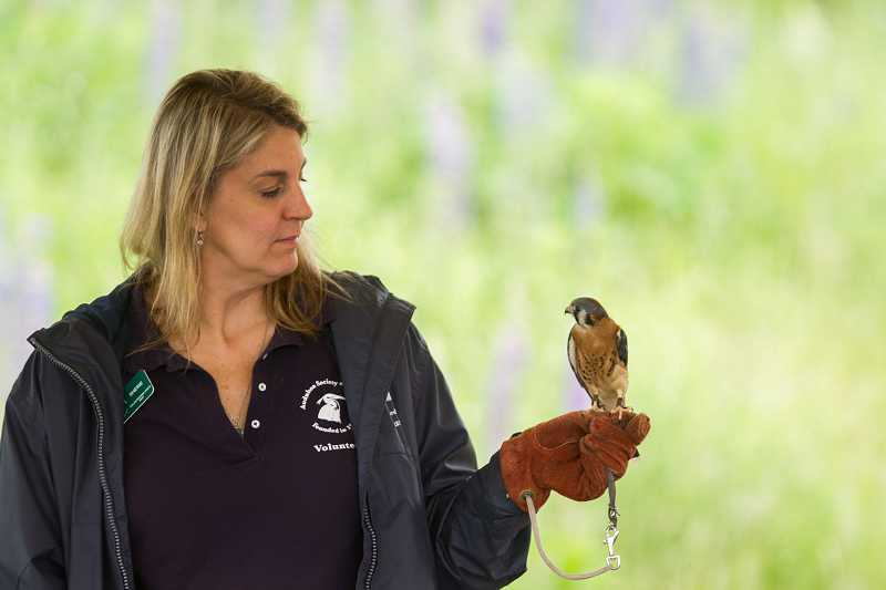 by: TIMES PHOTO: DAVID BLAIR - Sherie Salzwedel, an Audubon Society of Portland volunteer, shows off an American kestrel at the Tualatin River National Wildlife Refuge.