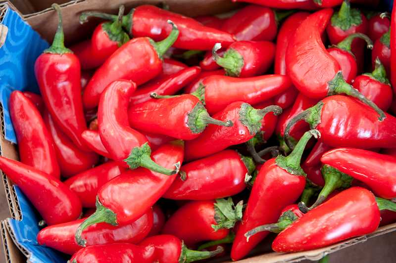 by: COURTESY PHOTO: LYNN KETCHUM - Chile peppers get their intense pungency from a chemical compound called capsaicin.