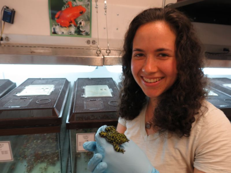 by: PHOTO COURTESY OF  AUSTEN WEYMUELLER - Reed College student Taylor Stinchcomb found a common weedkiller harms frogs, in research conducted at the college's biology lab.