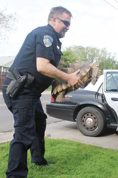 by: HOLLY M. GILL - Mel Brown, of the Madras Police Department, loads 'Tiny' into a police car.