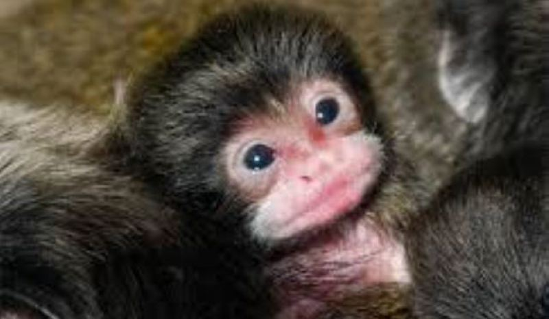 by: KOIN NEWS 6 - A Tamarin monkey