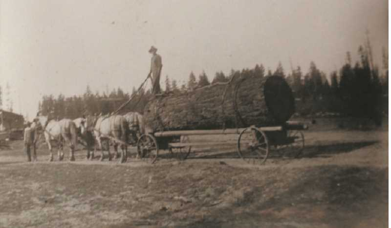 by: YODER FAMILY - Largest log ever hauled by horses to the Yoder Mill. Frank Taylor and Albert Yoder pictured.