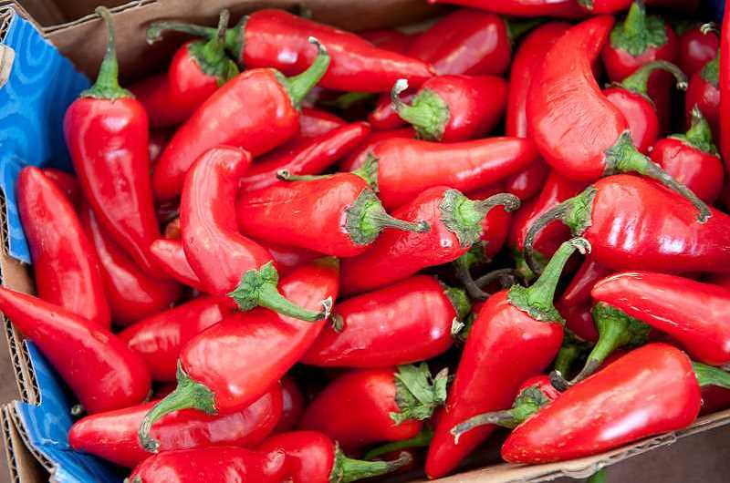 Hot! - Chile peppers get their intense pungency from a chemical compound called capsaicin.
