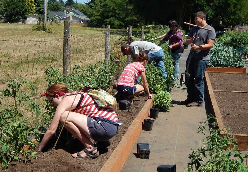 by: SUBMITTED PHOTO - Canby FFA members work in a local garden as part of an award-winning project for the Nutrients for Life Foundation. The project involved collecting and testing soil samples, growing vegetables and educating community members.