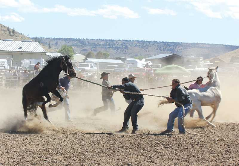 by: JEFF WILSON/THE PIONEER  - The Pi-Ume-Sha Treaty Days rodeo in Warm Springs closed out Sunday with the controlled chaos that is the wild horse race. Eleven teams competed at once in the rodeo's most exciting event. .