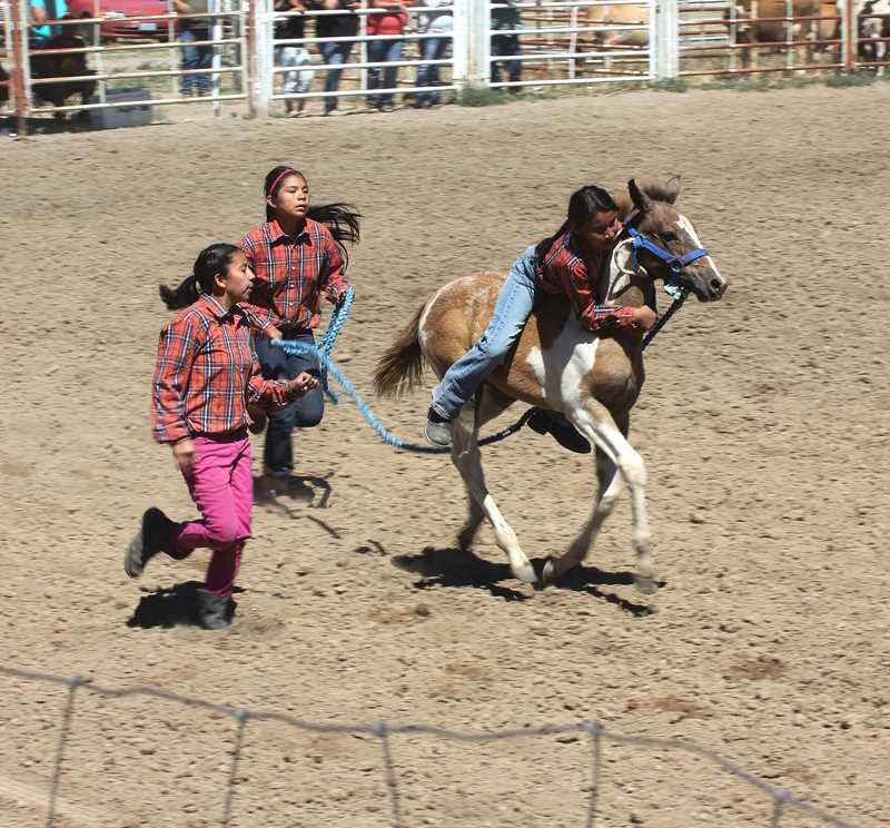 by: JEFF WILSON/THE PIONEER - From left: Valencia Fisher, 11, Mona Meanus, 12, and Patience Fisher, 12, all of Warm Springs, race to the finish line in the wild colt race Sunday.