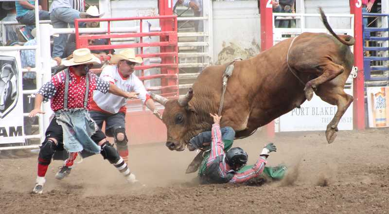 by: JIM BESEDA/MOLALLA PIONEER - Bullfighters Dan Newman (left) and Rowdy Barry try to draw the attention of Flying 5 Rodeo's No. 958 away from fallen bullrider Jeff Askey of Martin, Tenn., during Friday afternoon performance at the 91st Molalla Buckeroo PRCA Rodeo.