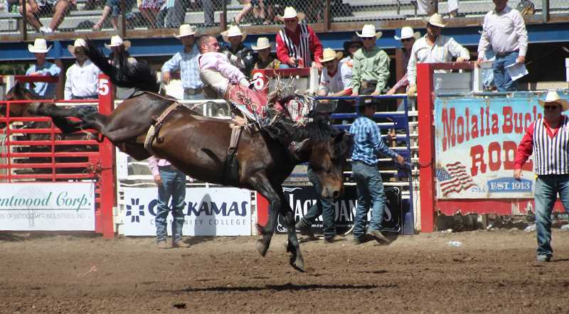 by: JIM BESEDA/MOLALLA BUCKEROO - Three-time bareback world champion Kaycee Feild of Spanish Fork, Utah earned an 85-point ride aboard Big Bend Rodeo's Commotion Toddy to win Friday's round and move into the overall lead through three of five performances at the 91st Molalla Buckeroo PRCA Rodeo.
