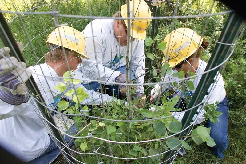 by: KEVIN SPERL  - Crew Leader Cheryl Sumerlin (right) works with team members Garret Dennis and Mike Burleigh to secure fencing around Aspen saplings located in the Spears Meadow area of the Ochocos.