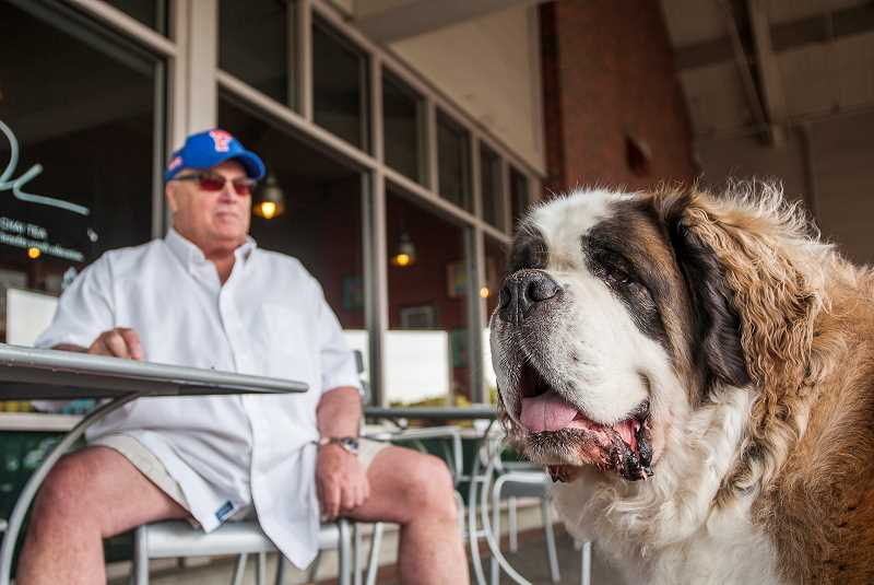 by: SPOKESMAN PHOTO: JOSH KULLA - Local resident John Bartholf and his St. Bernard, Jasper, celebrated the latters fourth birthday Monday at Starbucks in Wilsonvilles Town Center shopping center by giving away $1,000 worth of drinks to all comers.