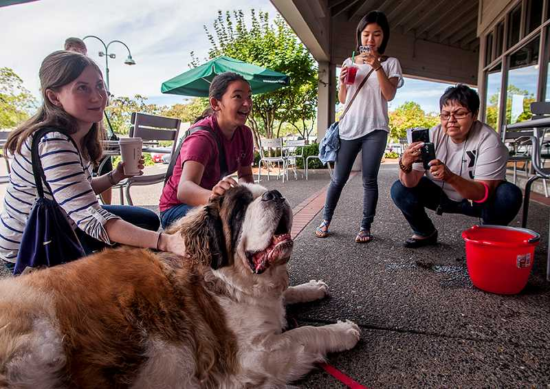 by: SPOKESMAN PHOTO: JOSH KULLA - A crowd of well-wishers gathers around Jasper Monday morning at the Lambs Starbucks, including former WHS graduate Kalia Bistolas (center), to wish the St. Bernard a happy fourth birthday.