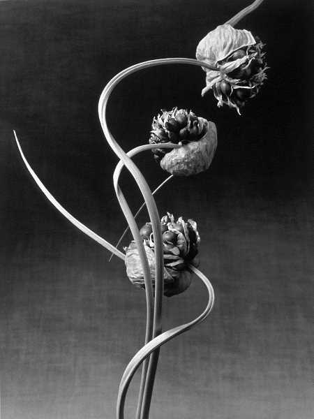 Loren Nelson will display his photographs including this piece titled Allium  at Lakewood Center Sunday through Sept. 8.