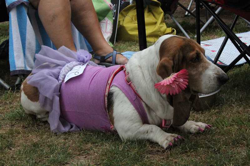 by: LINDSAY KEEFER - Basset Hound Games