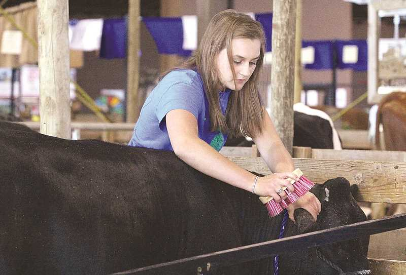 by: LINDSAY KEEFER - Getting pretty - Sara Pierson prepares her animal for show at the Marion County Fair.