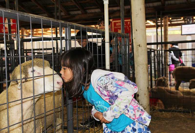 Photo Credit: NEWS-TIMES PHOTO: STEPHANIE HAUGEN - Youngsters sneak kisses with 4-H animals while strolling through the barns.