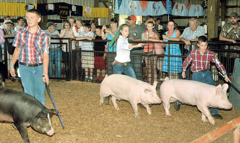Photo Credit: SETH GORDON - Pampered pork -- Kenna Roth (center) and George Hatch (right) show their prized pigs during one of the many livestock competitions at the Yamhill County Fair last week.