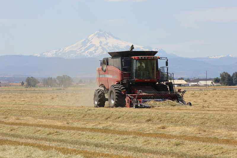 Photo Credit: SUSAN MATHENY/MADRAS PIONEER - A combine harvests grass seed in a field owned by Macy Farms in Culver.